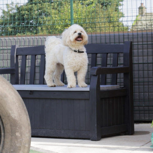 The new exercise areas at Bleakholt Animal Sanctuary
